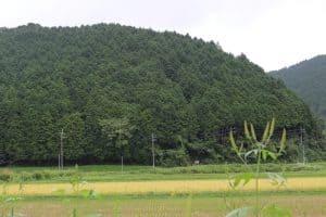 丹波山垣城