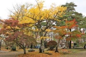 久保田城の紅葉