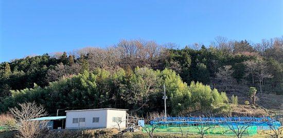 甲斐・青柳城(青柳寺城)