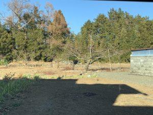 甲斐・椿城(甲斐・上野城)
