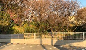 紀伊・太田城の水攻め堤防