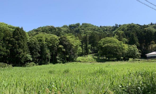 若狭・国吉城(佐柿国吉城)