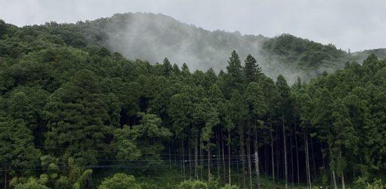 下野・藤沢城(鍋山城)