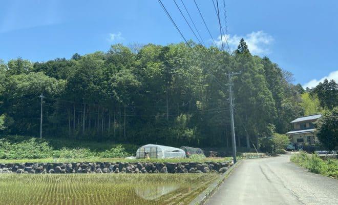 伊豆・田代城(Ⅱ城)