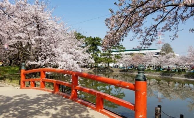 刈谷城の桜2